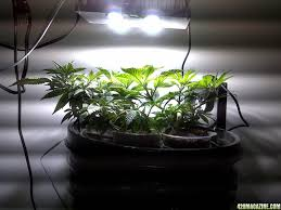 cree diy cob led why do people use white lights