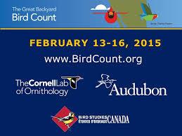 Audubon Backyard Bird Count by 18th Annual Great Backyard Bird Count U2013 Backyard Birds The Bird
