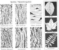 80 best how to draw realistic trees plants bushes and rocks