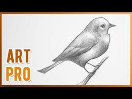 draw bird step step