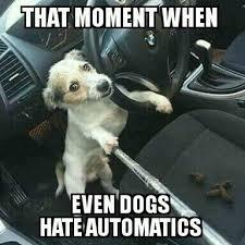 Dog Driving Meme - my meme not mine dog