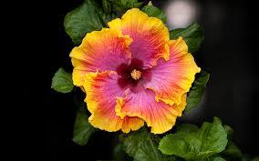 Beautiful Flower Pictures Beautiful Flower Pictures Beautiful Flower Beautiful Flower