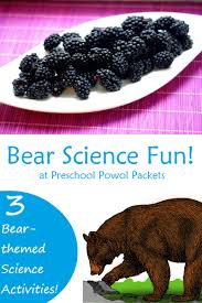 bear science activities for bear theme preschool powol packets