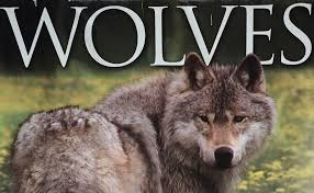 the wolves on canada u0027s powder highway with kids