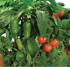 aerogarden salsa garden seed kit aero601