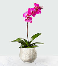 orchid flowers orchid flowers send and purple orchid bouquets with ftd