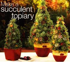 make a succulent topiary