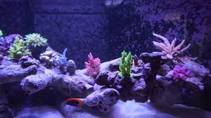 Aquascape Reef Deltabecken 500 Liter Als Floating Reef Aquascape Reef Tank