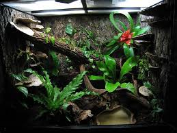 eyed tree frog setup reptiles and small animals