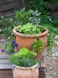edible displays mini herb garden hgtv