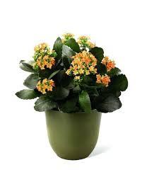 Design For Indoor Flowering Plants Ideas Best 25 Indoor Flowers Ideas On Pinterest House Plants Great 20