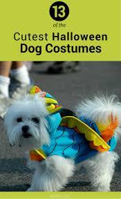 coc halloween costumes 970 best halloween ideas images on pinterest halloween ideas