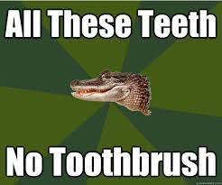 Alligator Memes - ornery alligator memes quickmeme