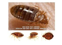 One Bed Bug Bed Bugs Nyc Stop Living With Bed Bugs One Bedroom Apartments Up