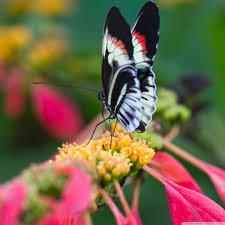 beautiful butterfly on flower macro uhd desktop wallpaper for