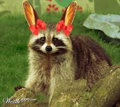 Evil Raccoon Meme - evil raccoon meme easter raccoon best of the funny meme