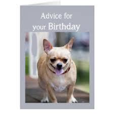 chihuahua birthday cards photocards invitations more