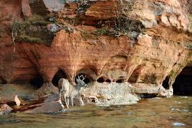 Wisconsin wildlife tours images Overnight kayaking trip apostle islands sea caves living jpg