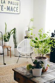 Best Plants For No Sunlight Tips For Keeping Indoor Plants Alive U2013 A Beautiful Mess