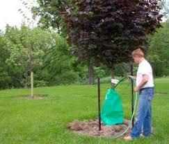 tree watering bag king bag manufacturing