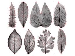 exploring leaf patterns with machine learning and computer vision