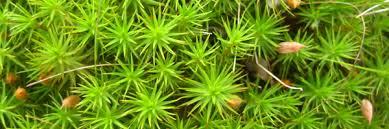 aquarium moss 101 the aquarium guide