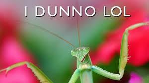Mantis Meme - funny mantis meme text wallpaper 50932