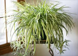 Air Purifying Plants 9 Air by Earth Day 8 Air Purifying House Plants