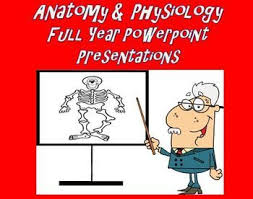 What Is Anatomy And Physiology Class 148 Best Anatomy Images On Pinterest Anatomy Medicine And