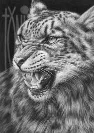 588 best art animal drawings images on pinterest drawings