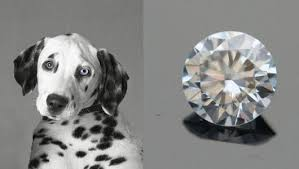 ashes to diamonds ashes to ashes dust to diamonds mnn nature network