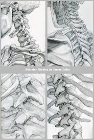 Drawings Of Halloween Best 25 Skeleton Drawings Ideas On Pinterest Skeleton Anatomy