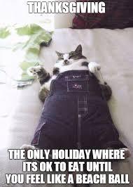 cat meme imgflip
