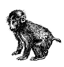 little monkey drawing sketch hand drawn illustration stock vector