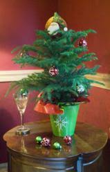 decorate with live mini trees this season