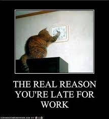 Sneaky Cat Meme - the real reason you are late for work everyday funny cats dump a day
