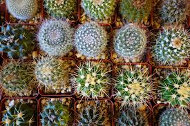 where to buy succulents air plants and other indoor greenery in