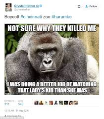 Gorilla Memes - kaley cuoco and ricky gervais lead tributes to harambe the gorilla