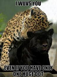 Meme Animals - funy animals love meme bajiroo com