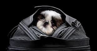 Sleepypod Mobile Pet Bed The Upper Paw Products We Love Sleepypod Luxury Pet Carrier