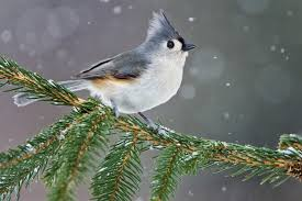 Birds In Your Backyard How To Identify 20 Winter Backyard Birds At Your Feeders Aerial