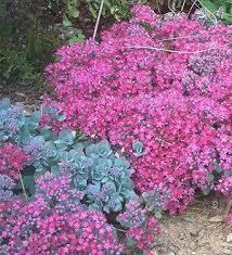 Summer Flower Garden Ideas - 157 best flowers full sun images on pinterest flower gardening