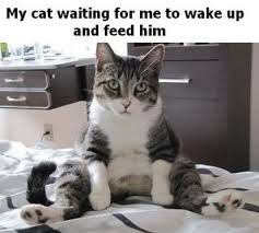 Meme Waiting - my cat waiting for me cat meme cat planet cat planet