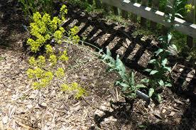 herb garden update u2013 may 31 2017 u2013 woldumar nature center