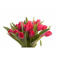 tulip bouquets tulip bouquet flower muse