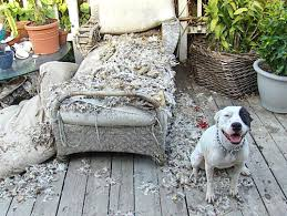 Dog Chaise Rip Chaise Lounge L A Unleashed Los Angeles Times