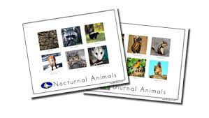 printable animal activities nocturnal animals sort spell out loud