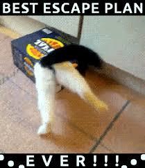 Funny Memes Gifs - cat escape funny cats cat favim com find make share gfycat gifs
