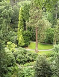 evergreen tree types popular evergreen trees for landscaping