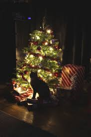 Simons Cat Christmas Tree by 887 Best Christmas Kitties Images On Pinterest Christmas Cats